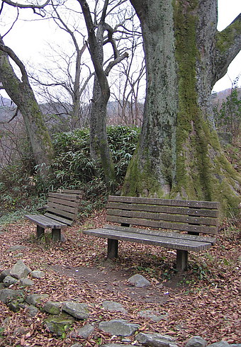 Самое первое грецкоореховое дерево в Корее