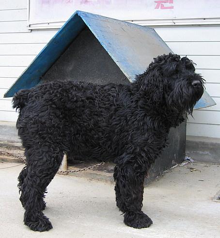 Собака - нас уверяли, что она русская